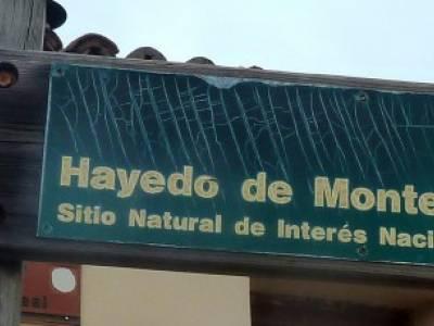 Hayedo Montejo; Reserva Biosfera Sierra Rincón; senderismo por madrid